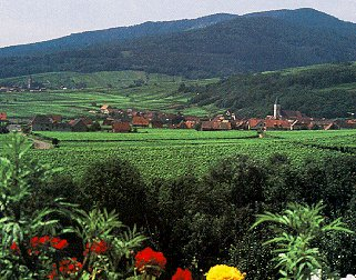The Route de Vin in Alsace.