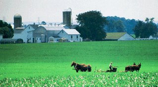 An Amish farm in Lancaster County.
