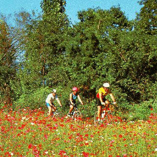 Bicycling through wildflowers.