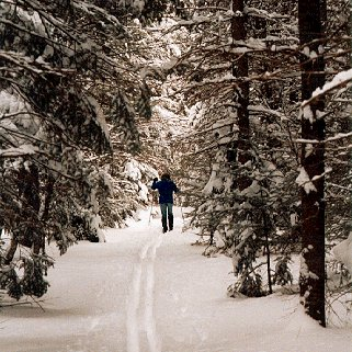 A skier enjoys the serenity of the Maine woods.