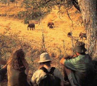 Elephants in Matusadona National Park.