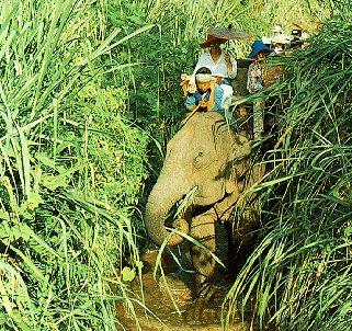 Thai elephant safari.