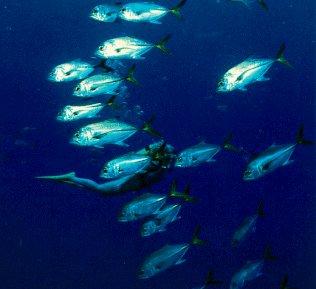 A diver undersea.