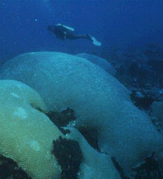 A diver explores Tobago's pristine seas.