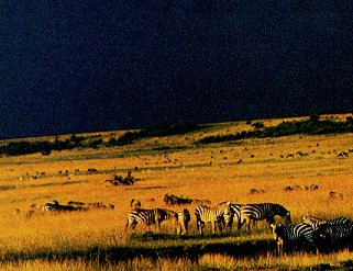 The savanna of East Africa supports many animals.