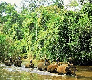 Exploring northern Thailand by elephant.