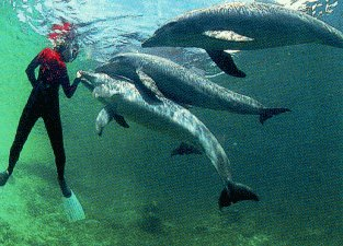 Snorkeling with dolphins at Bailey's Key.