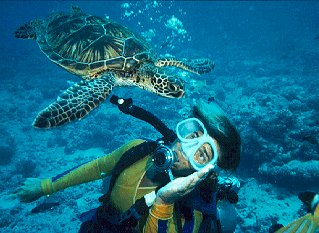Guide Lisa Choquette with a green sea turtle.