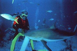 A diver hand-feeds a shark.