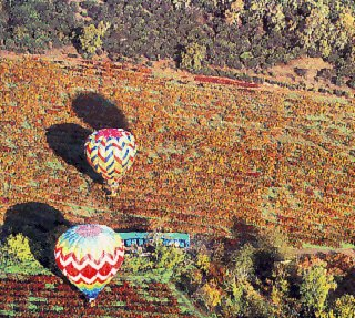 Balloons travel over the Napa Valley.