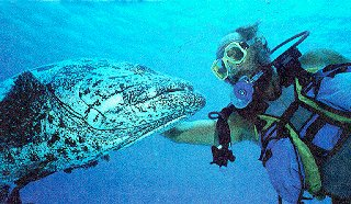 Close encounters in the Great Barrier Reef.
