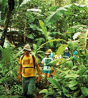 Explore the rain forest of Costa Rica.