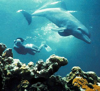 Dive with dolphins in Central America.