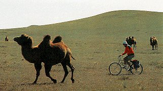 Mountain biking with the camels in Inner Mongolia.