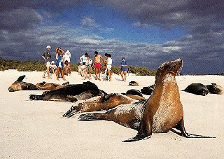 The wildlife of the Galapagos.