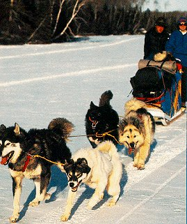 Mushing across the frozen Kawishiwi River.