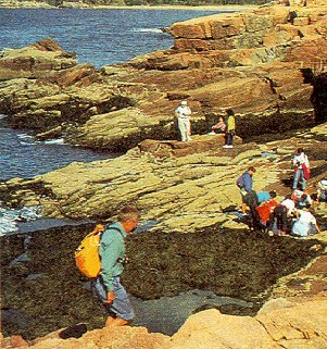 Hikers explore tidal pools among the rocks.