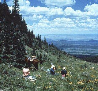 Enjoy an Alpine ride in the great Southwest.