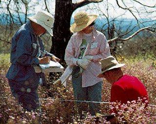 Ethnobotany assistants, Mesa Verde National Park.