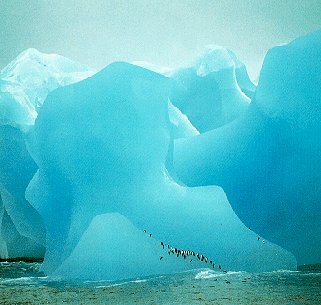 The Antarctic coast and its wildlife.